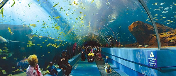 les plus grands aquariums du monde felicie artcolors