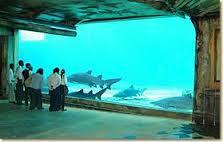Ushaka Marine World Aquarium Tunnel Check Out Ushaka Marine World Aquarium Tunnel Cntravel