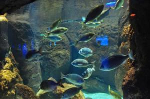 istanbul-akvaryum-aquarium