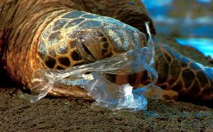 turtle-stuck-in-plastic